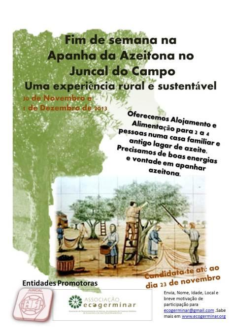 Cartaz apanha da azeitona